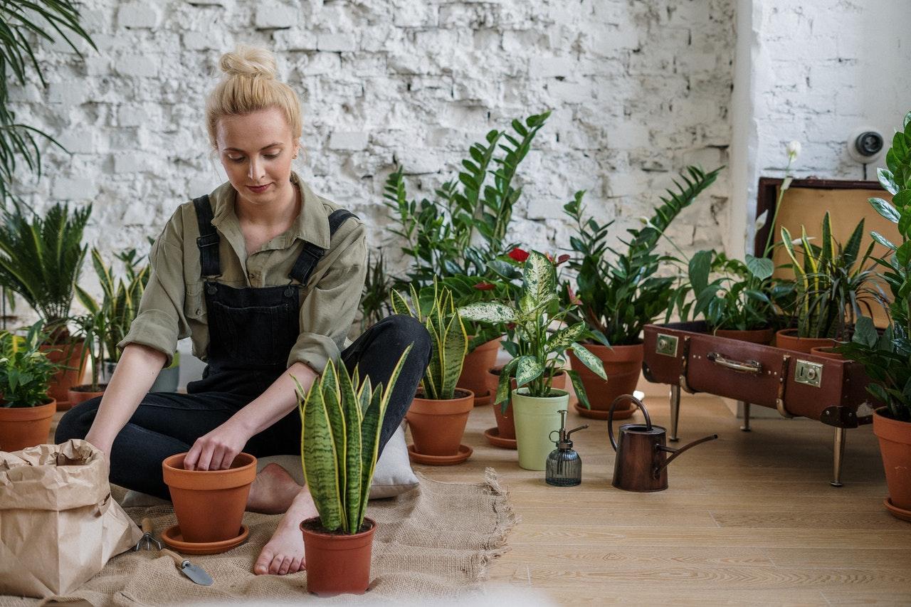 Cztery popularne rośliny, które warto mieć w swojej kolekcji
