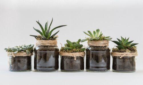 Nietoksyczne rośliny domowe do zaciemnionych pomieszczeń